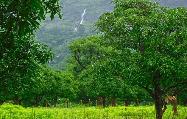 Green Valley Orchard(Karjat)